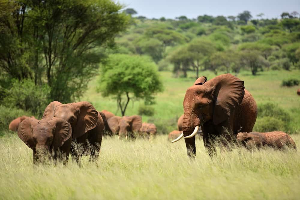 Safaritur i Tanzania