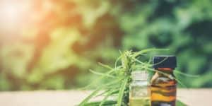 Cannabis olie ekstrakt