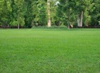 Forårsklar græsplæne
