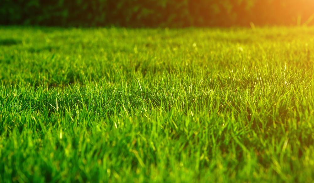 Grøn græsplæne til foråret