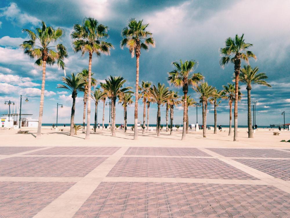 Strand og palmer i Valencia i Spanien
