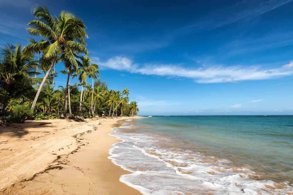 Palmestrand - Den Dominikanske Republik