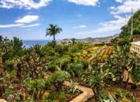Botanisk have i Funchal - Madeira i Portugal