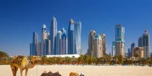 Kameler på stranden i Dubai