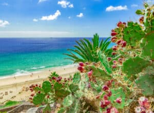 Esquinzo strand - Fuerteventura i Spanien