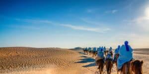 Kameler i Sahara - Tunesien