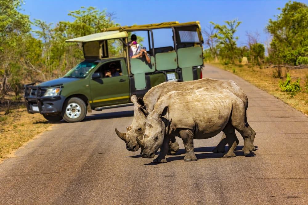 Næsehorn i Kruger National Park