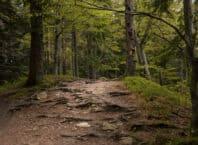 Schwarzwald i Tyskland
