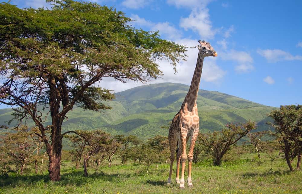 Ferie i Afrika